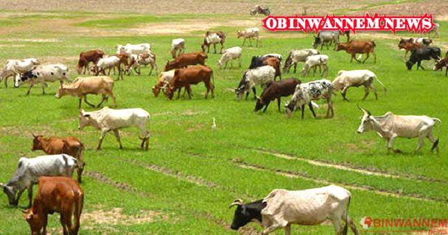 OPINION: How Fulani took over Nigeria